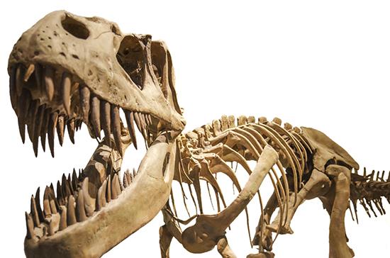 esqueleto da peça prática da OAB